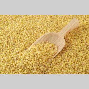 meiul-regele-cerealelor-1833a3815
